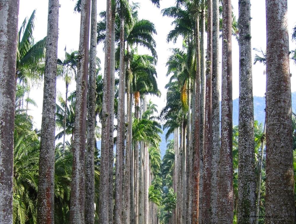 thegoodgarden|brazil|riodejaneiro|garden|912-2.jpg