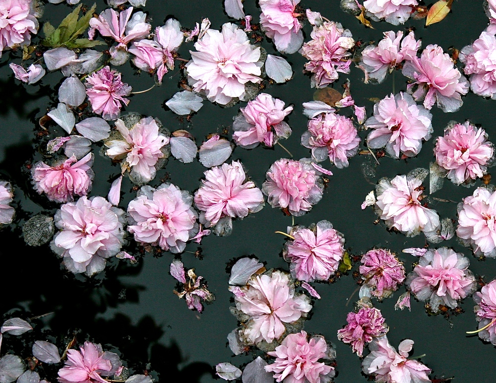 thegoodgarden blossoms front 4.JPG