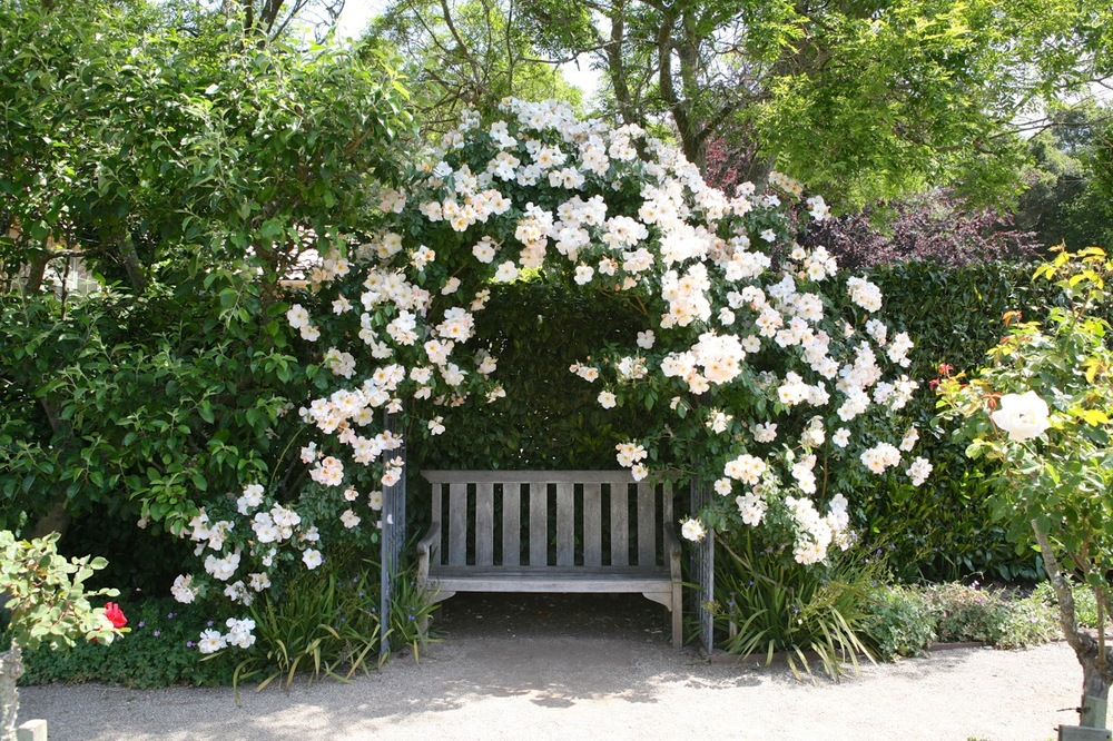 A bench at  Filoli 's Rose Garden in Woodside, California.