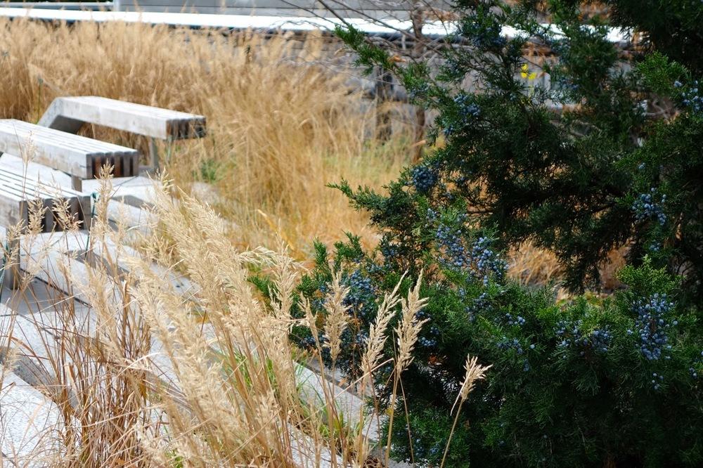 thegoodgarden|highline|NYC|davidcalle|8588.jpg