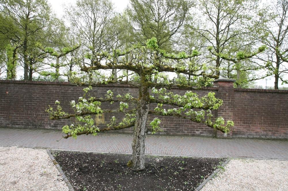 thegoodgarden|keukenhof|netherlands|6677.jpg