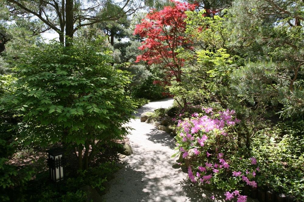 thegoodgarden|davidcalle|andersonjapanesegardens|6586.jpg
