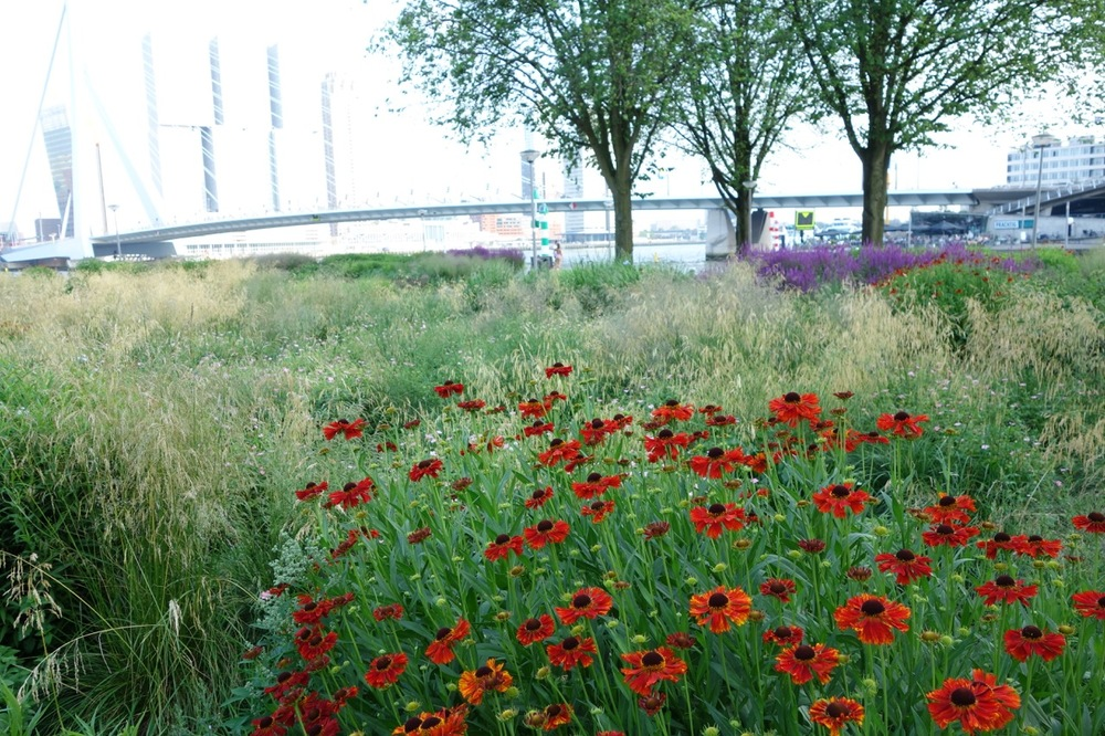 thegoodgarden|Rotterdam|MaasRiverfront|00051.jpg