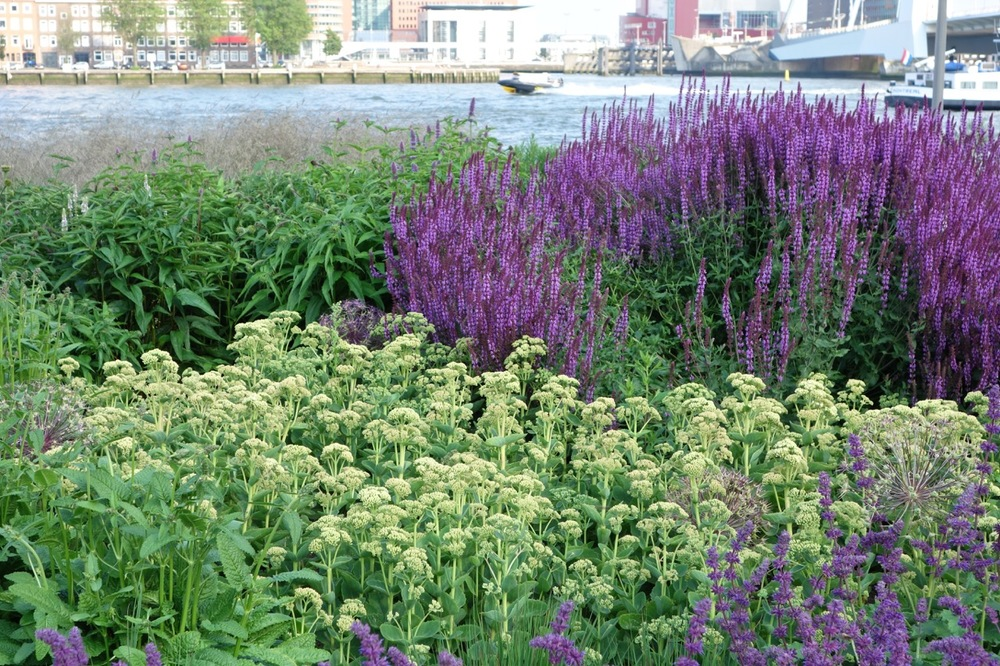 thegoodgarden|Rotterdam|MaasRiverfront|00054.jpg
