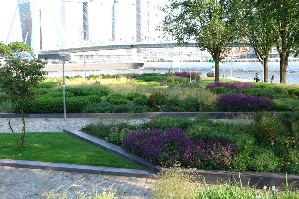 thegoodgarden|Rotterdam|MaasRiverfront|00082.jpg