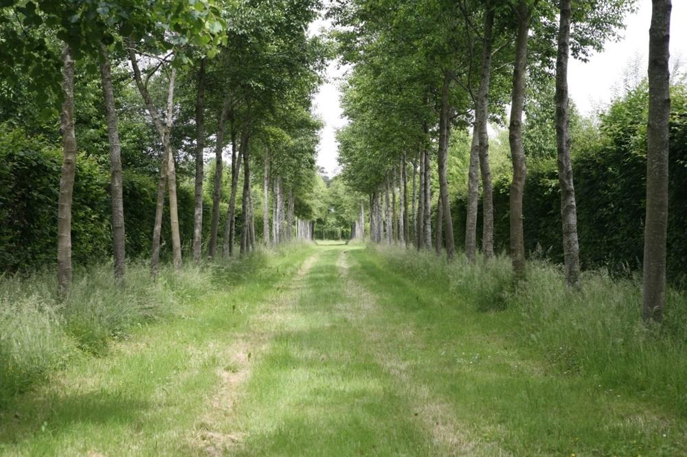 thegoodgarden|Versailles|formal|8537.jpg