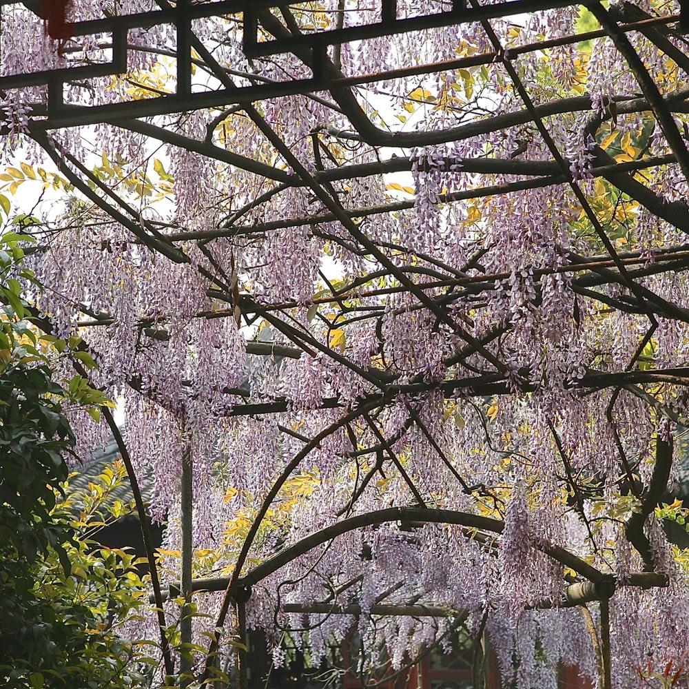 thegoodgarden|Suzhou|humbleadministratorsgarden|5126.jpg