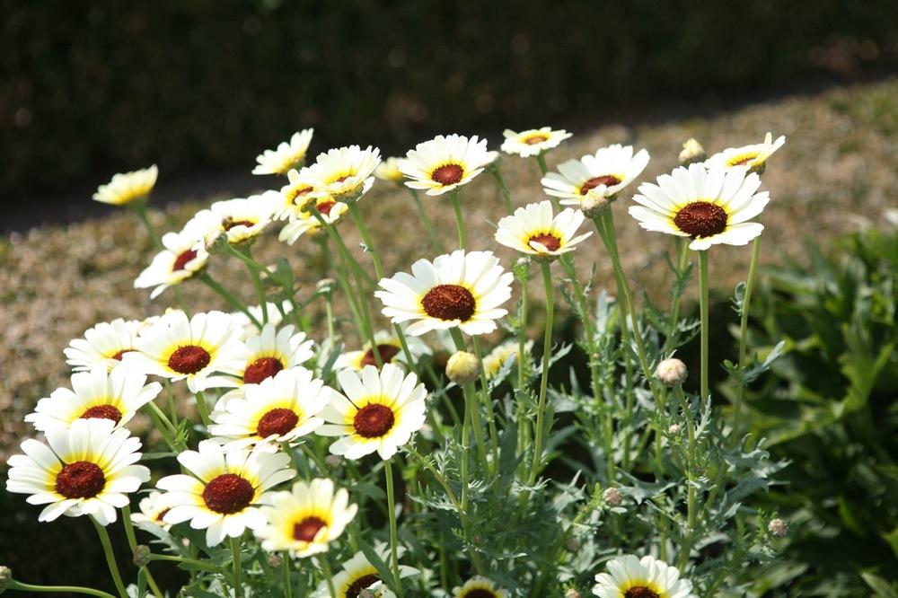 thegoodgarden|hetloopalace|summer|9816.jpg