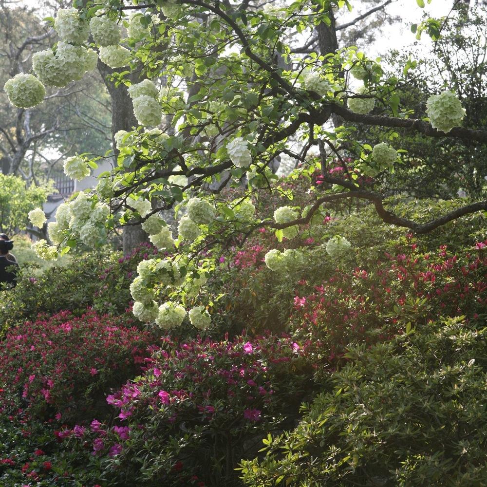 thegoodgarden|Suzhou|humbleadministratorsgarden|5321.jpg