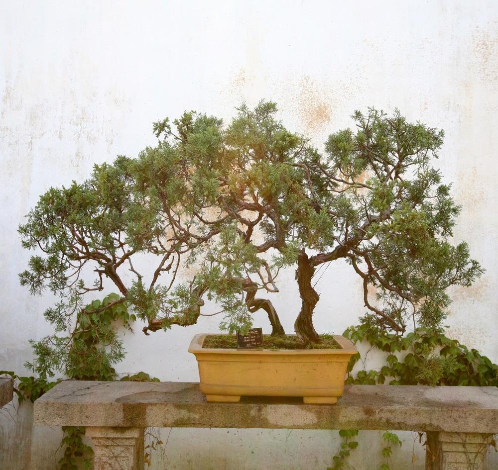 thegoodgarden|Suzhou|humbleadministratorsgarden|5044.jpg