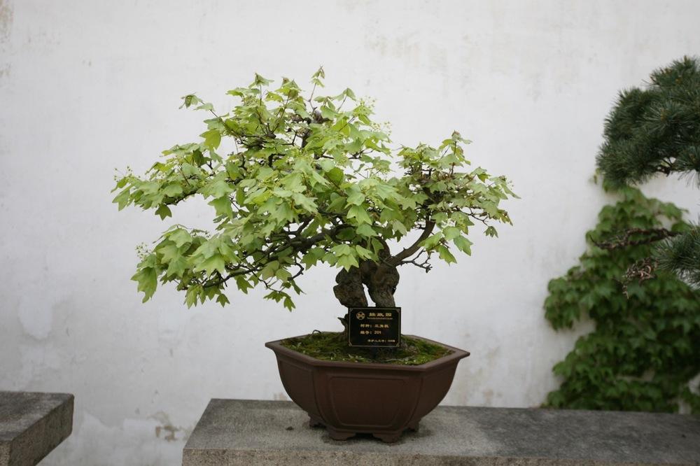 thegoodgarden|Suzhou|humbleadministratorsgarden|5047.jpg