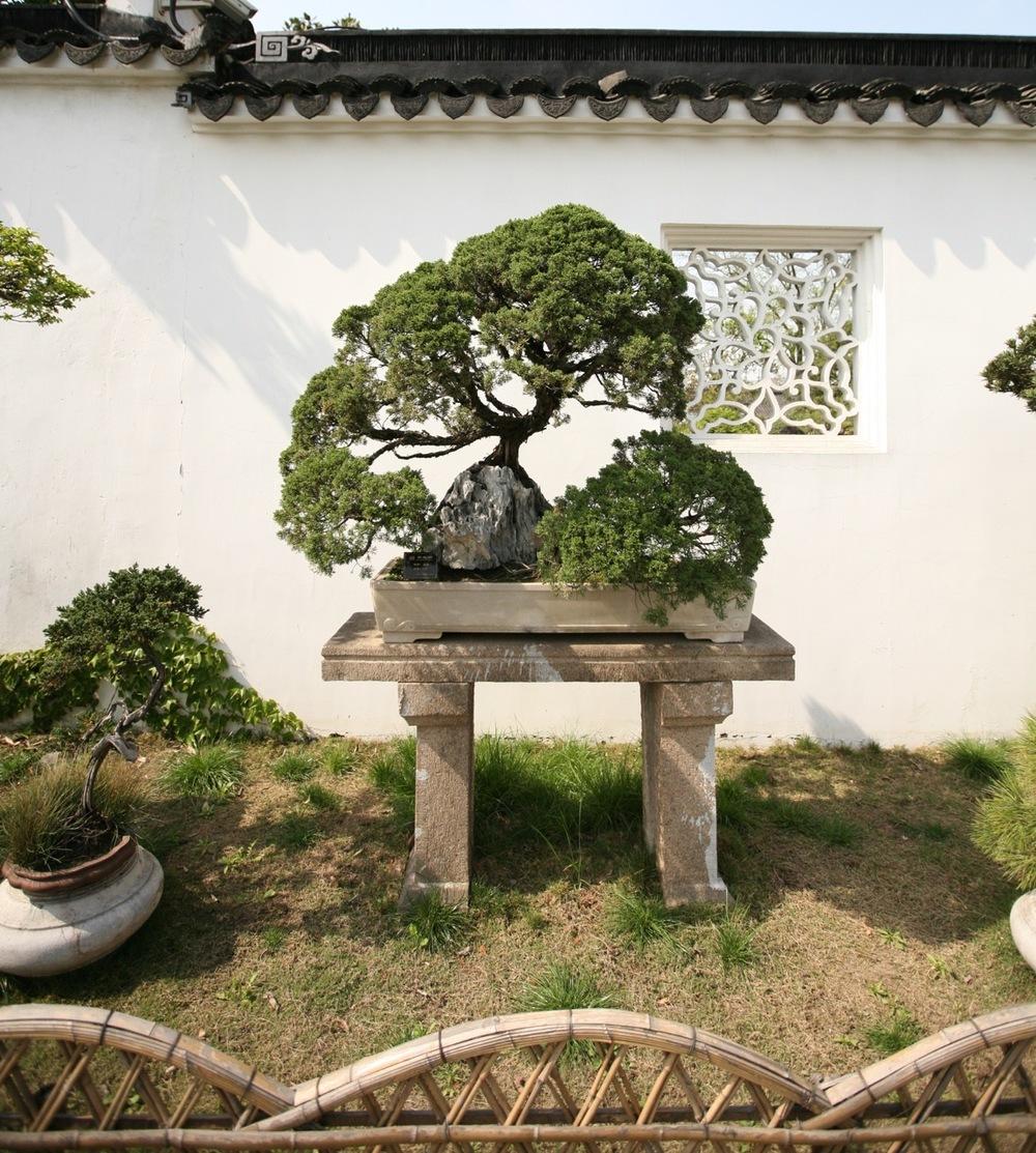 thegoodgarden|Suzhou|humbleadministratorsgarden|5056.jpg
