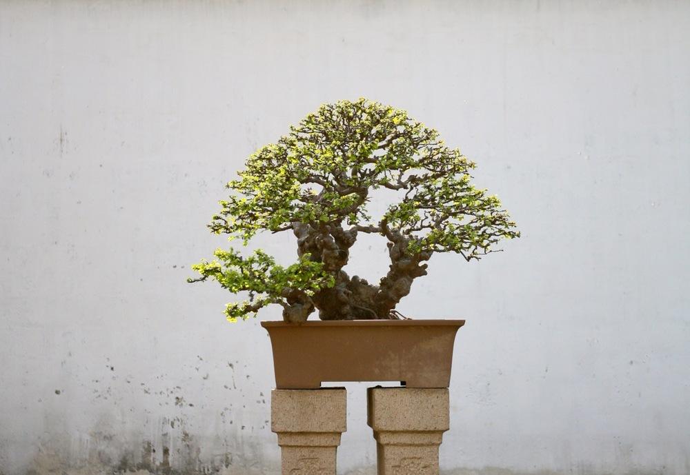 thegoodgarden|Suzhou|humbleadministratorsgarden|5060.jpg