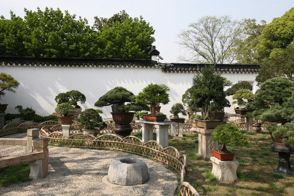 thegoodgarden|Suzhou|humbleadministratorsgarden|5063.jpg