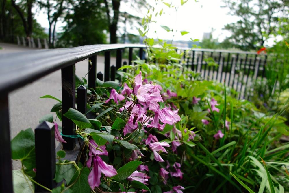 thegoodgarden|davidcalle|riversidepark|gardenpeople03541.jpg