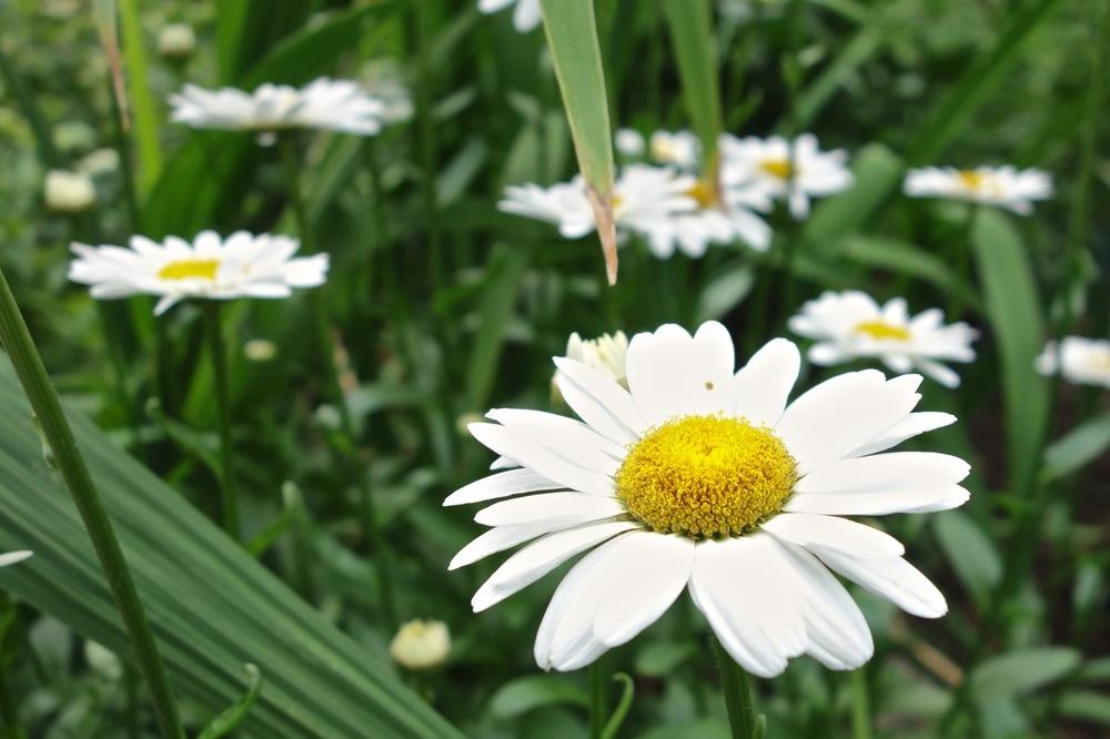 thegoodgarden|davidcalle|riversidepark|gardenpeople03504.jpg