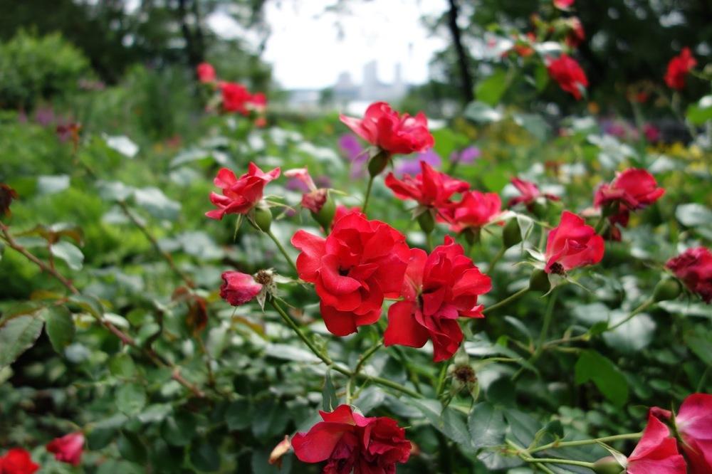 thegoodgarden|davidcalle|riversidepark|gardenpeople03525.jpg