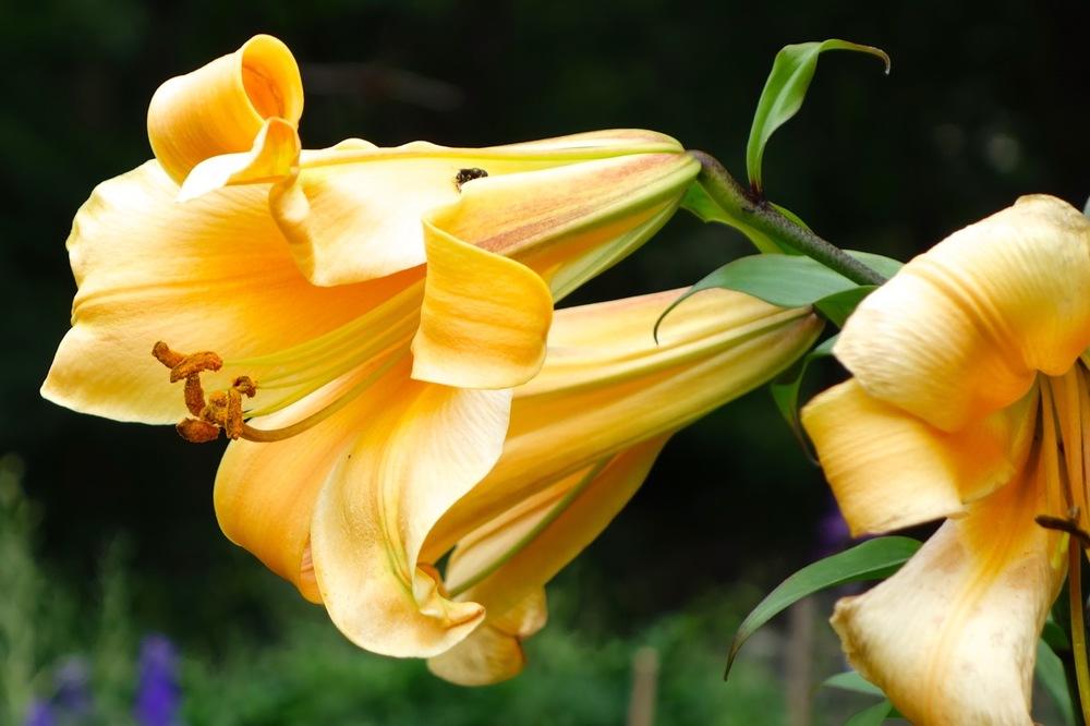 thegoodgarden|davidcalle|riversidepark|gardenpeople03548.jpg