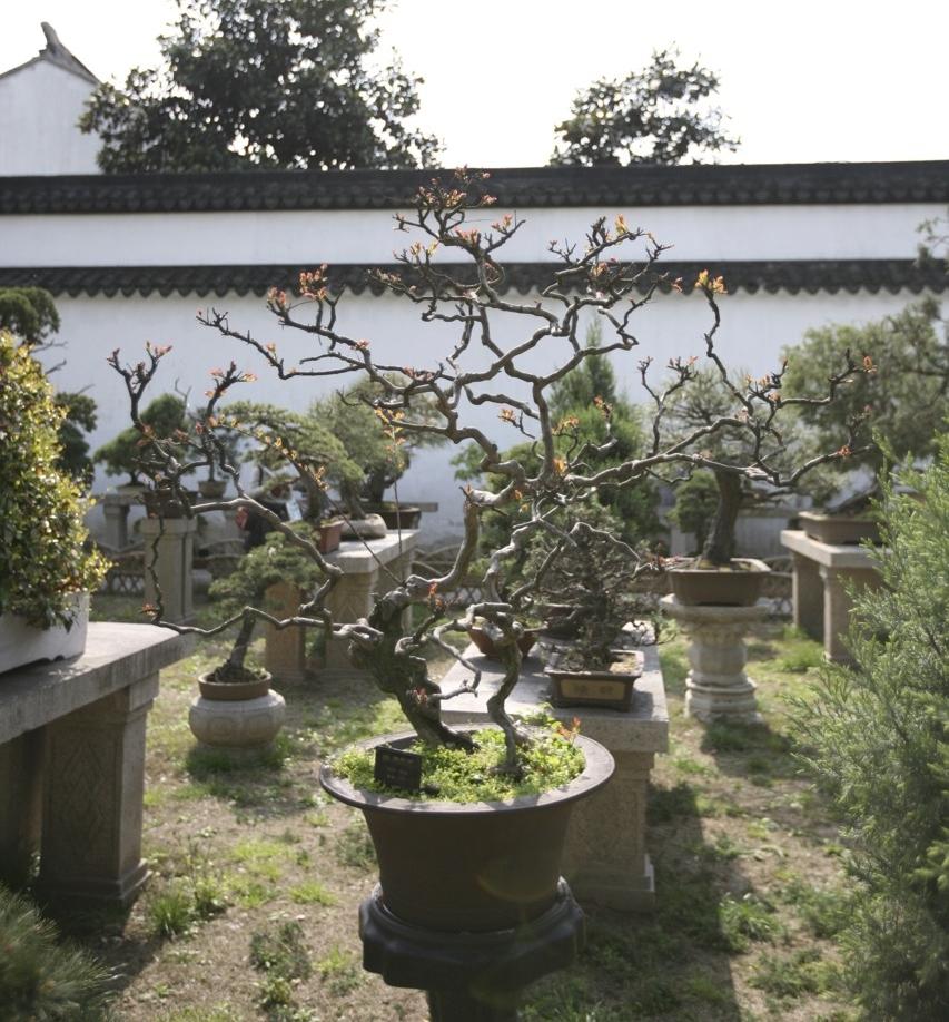 thegoodgarden|Suzhou|humbleadministratorsgarden|5043.jpg