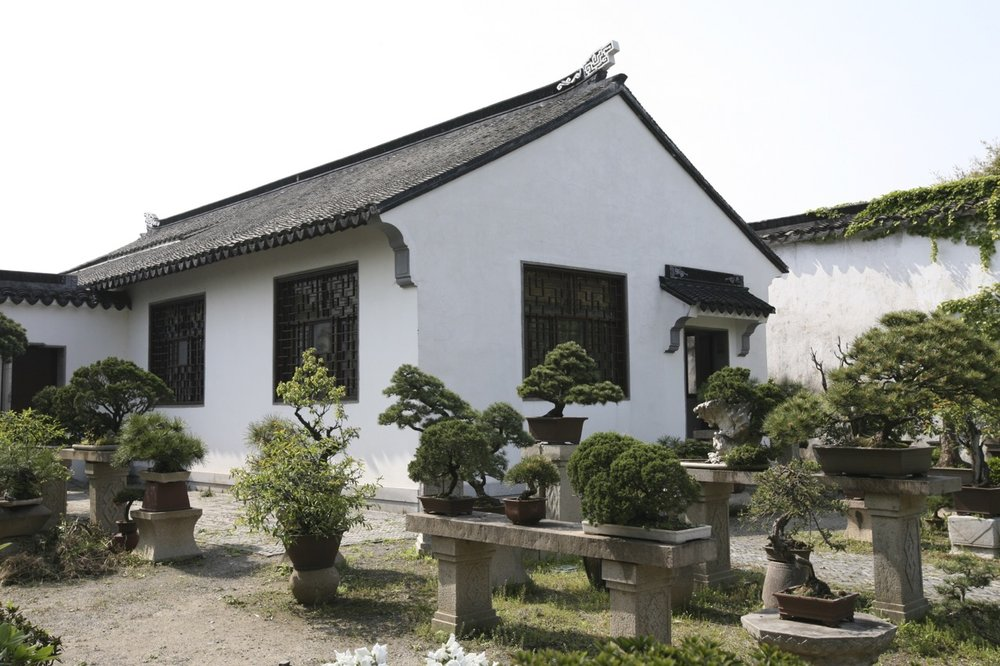 Fox Valley Bonsai Society member trees continue an ancient tradition that started in China.  Here we see tray landscapes in  The Humble Administrator's Garden  in Suzhou, China.  This garden dates back to 1509.