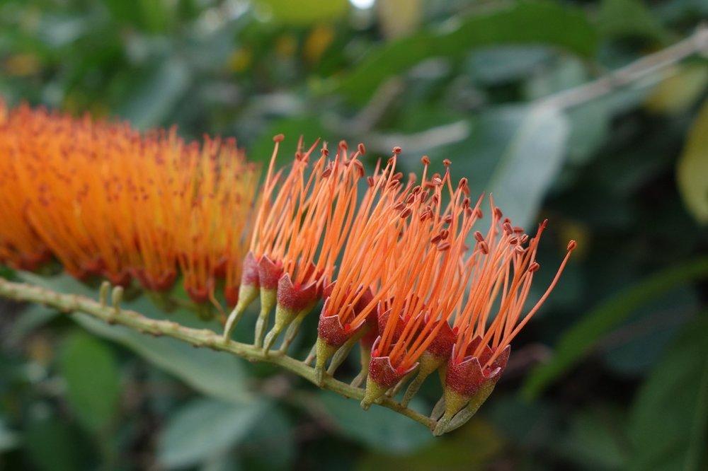 thegoodgarden|davidcalle|cuba|cienfuegosbotanicalgarden|00592.jpg
