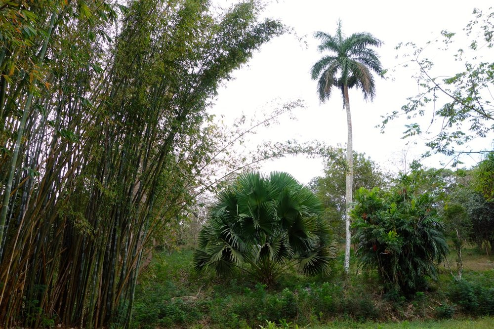 The garden is famous today for having the largest collection of palms in the world thanks to work started by Robert Grey, the Garden's first director.