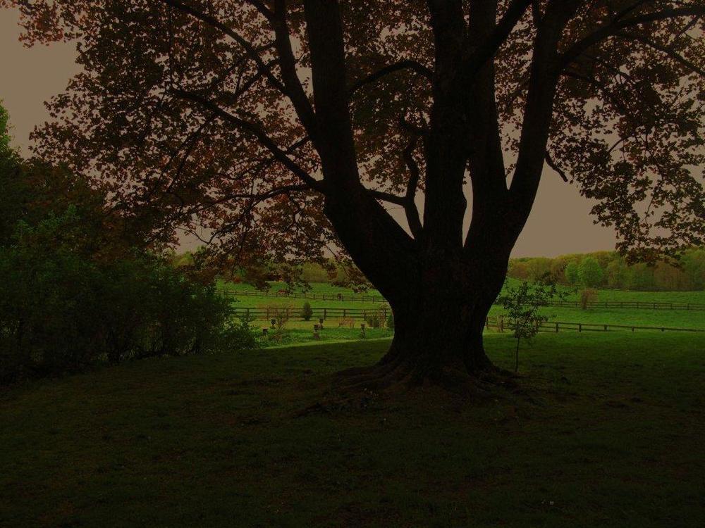 Big tree, magenta sky