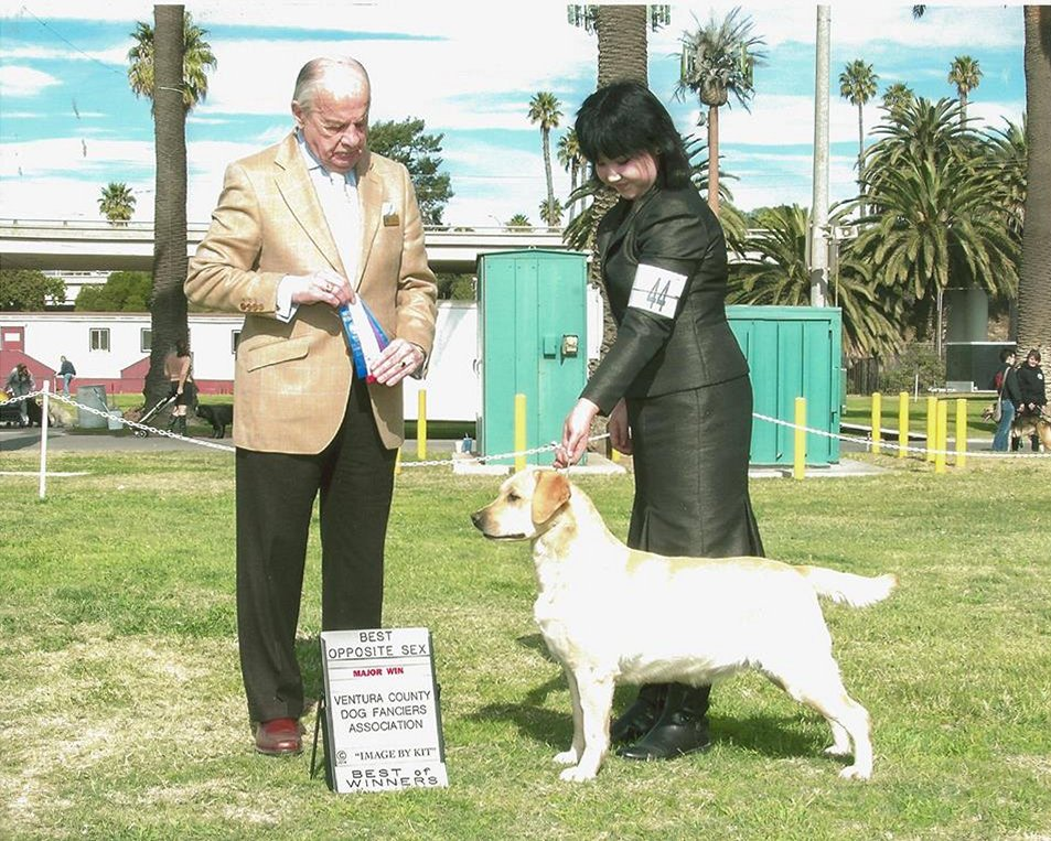 GG's first major - Handled by Mallori Seifert Winterfest: Ventura County Dog Fanciers Association - Ventura, CA Judge: Dr. Gareth Morgan-Jones January 19, 2014