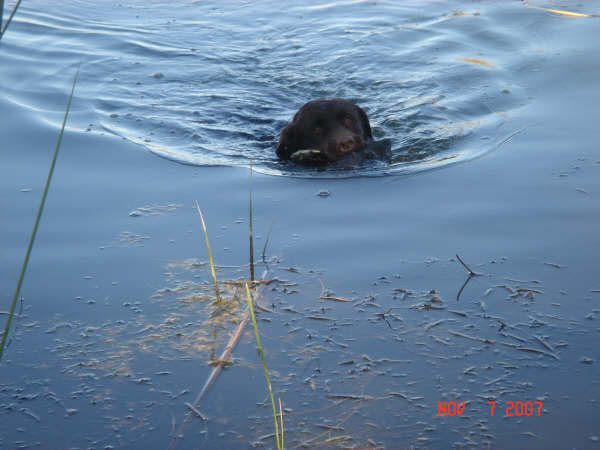 crocket swimming with a duck.jpg