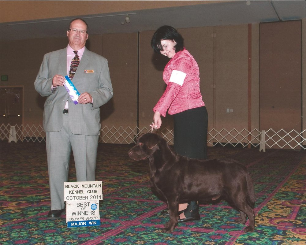 Storm's first major - Handled by Mallori Seifert. Black Mountain Kennel Club of Nevada - Las Vegas, NV Judge: Mr. Jay Richardson October 11, 2014