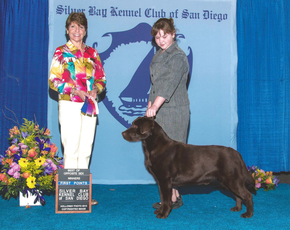 Storm's First Point - Handled by Mallori Seifert Silver Bay Kennel Club of San Diego - Del Mar, CA Judge: Mrs. Sue Goldberg February 23, 2013 *Point received from the 12-18 Month Puppy Dogs Class*
