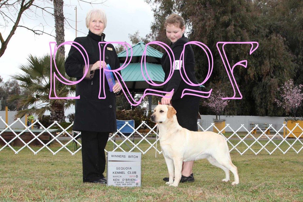 GG's first points - Handled by Mallori Seifert Sequoia Kennel Club - Hanford, CA Judge: Mrs. Jeanette McGinnis March 8, 2013