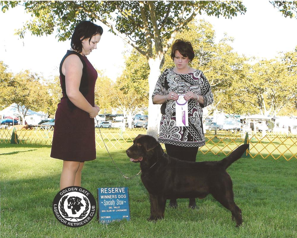 Storm's first specialty win - Handled by Mallori Seifert Golden Gate Labrador Retriever Club - Pleasanton, CA Judge: Mrs. Shari Kirschner October 18, 2014