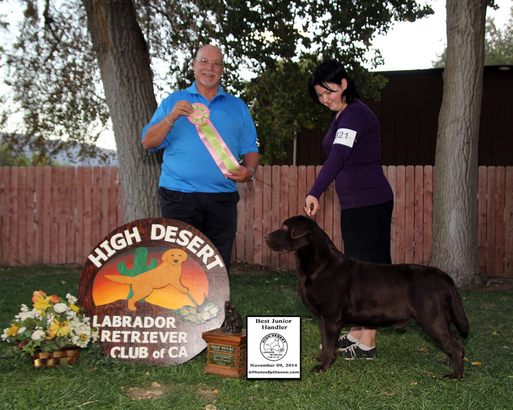 Storm and Mallori - Best Junior Handler High Desert Labrador Retriever Club - Acton, CA Judge: Mr. Rodger Orton November 9, 2014