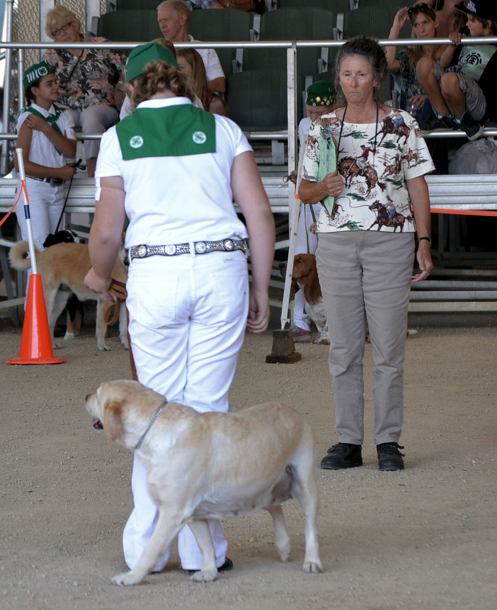 Mal & Rainy Obedience 2013 CA Mid State Fair E.jpg