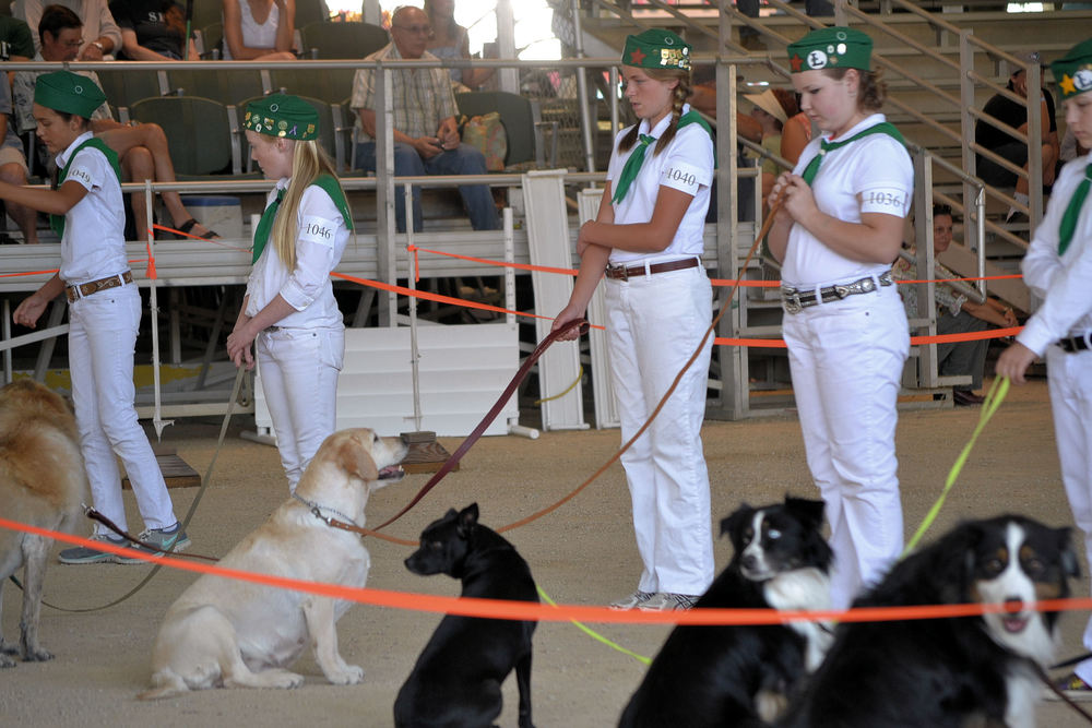 Mal & Rainy Obedience 2013 CA Mid State Fair F.jpg