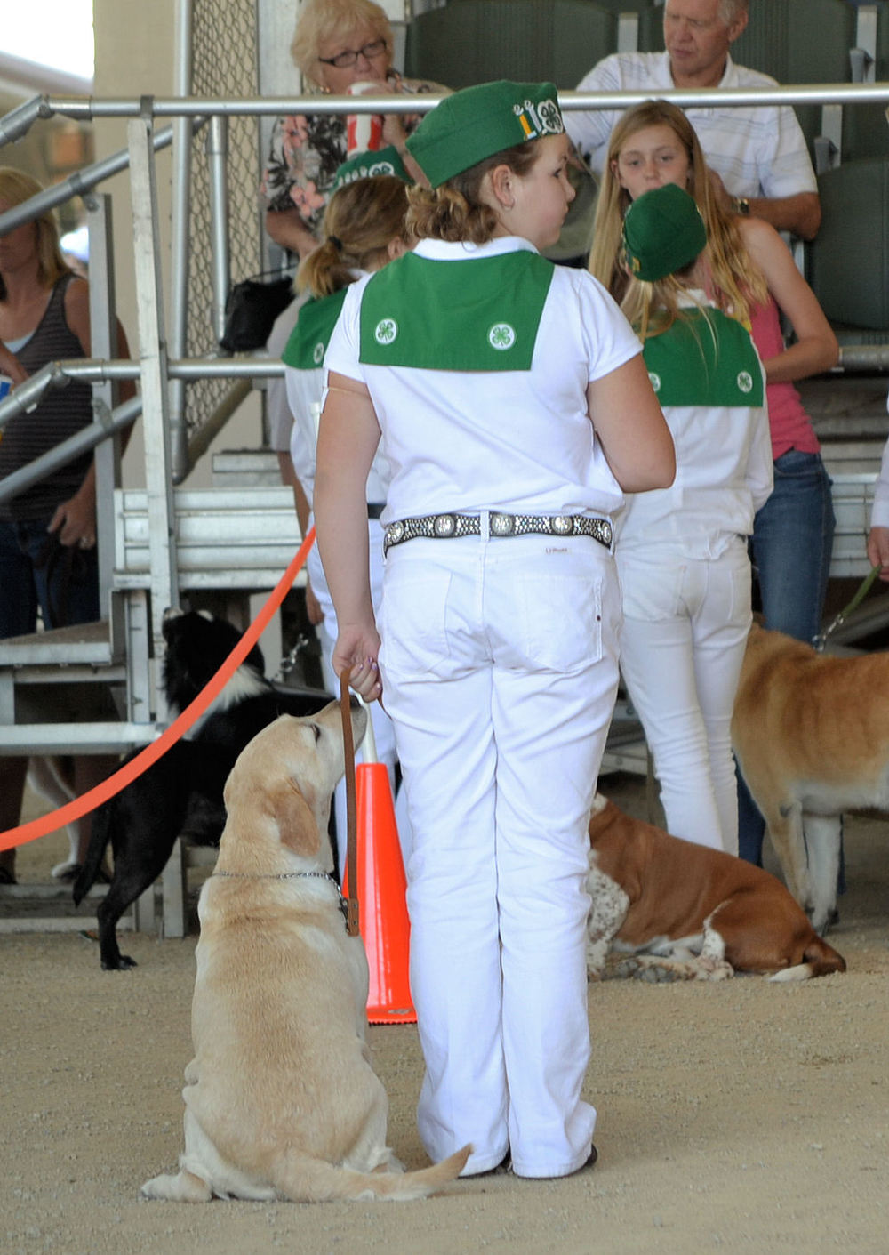 Mal & Rainy Obedience 2013 CA Mid State Fair.jpg