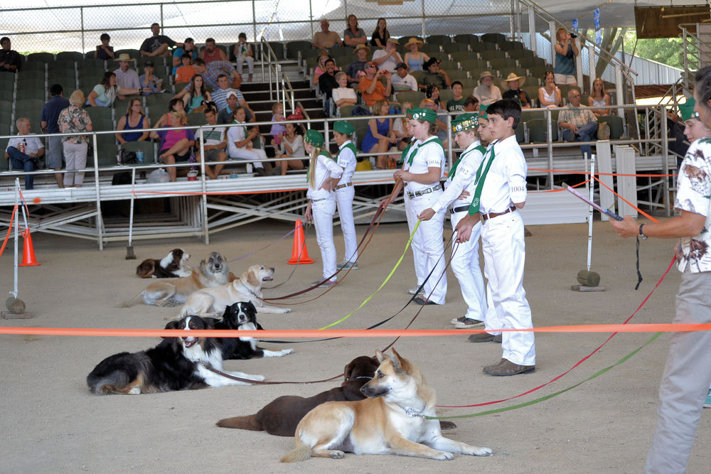Mal & Rainy Obedience 2013 CA Mid State Fair I.jpg