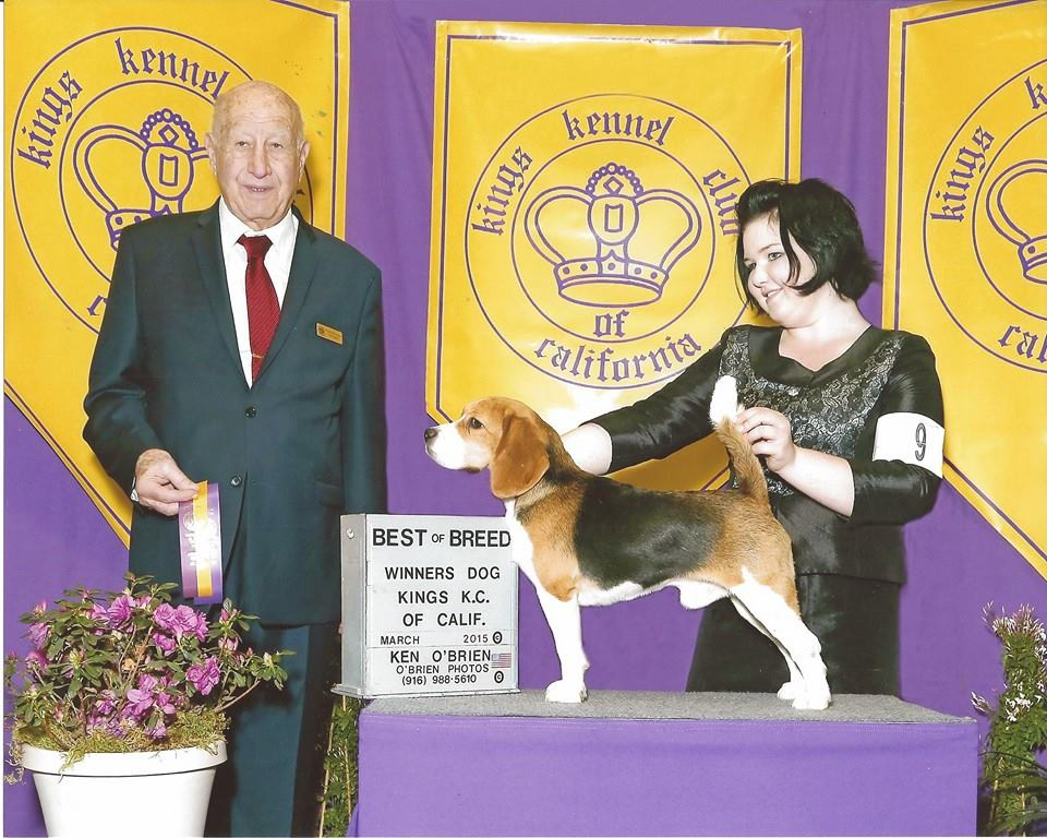 Miles' First Best of Variety win - Handled by Mallori Seifert Kings Kennel Club - Hanford, CA Judge: Mr. Ralph (Sonny) Ambrosio March 07, 2015 *Win received from the 12-18 Month Dogs Class*