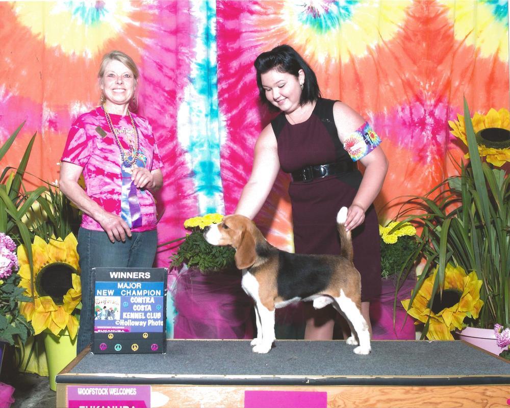 New Champion - Handled by Mallori Seifert Contra Costa Kennel Club (a.k.a. Woofstock) - Vallejo, CA Judge: Ms. Kalen M. Dumke June 07, 2015