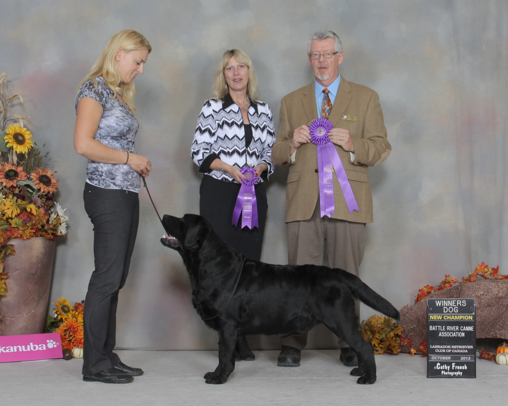New Canadian Chamption - Breeder-Handled by Jolene Lingnau (Eagertrieve) Back-to-back Winners Dog under breeder judges Judges: Mrs. Joanne Fernall (Devonsleigh) and Mr. Michael Woods (Waterdog) October 26, 2013