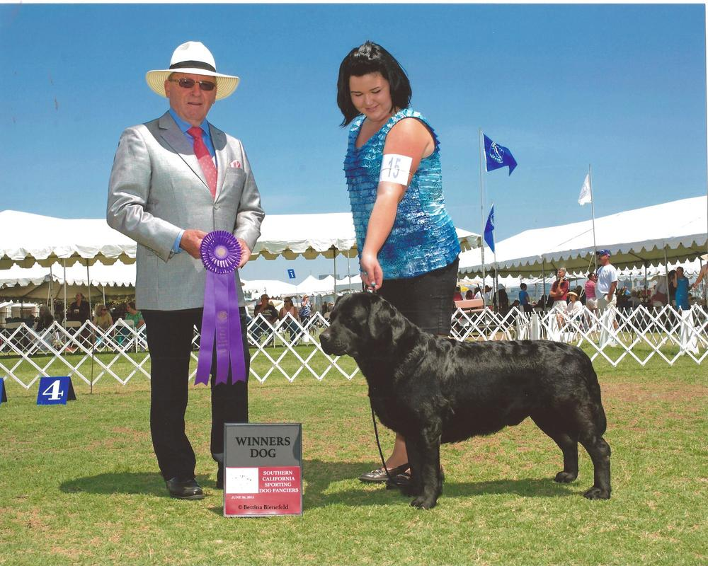 Jett's first California points - Handled by Mallori Seifert Southern California Sporting Dog Fanciers Judge: Mr. Wayne Burton June 26, 2015
