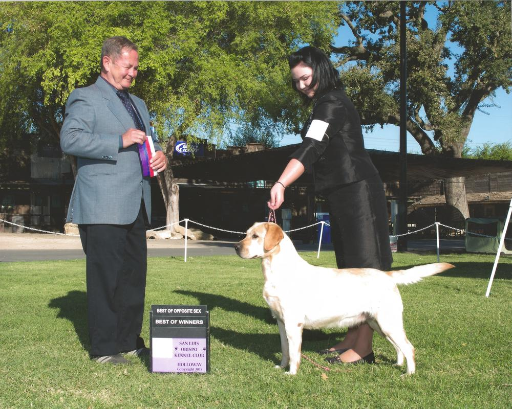 GG going WB/BOW/BOS San Luis Obispo Kennel Club - Paso Robles, CA Judge: Mr. G. Timothy Doxtater September 20, 2015