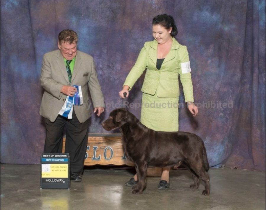 New Champion - Handled by Mallori Seifert San Luis Obispo Kennel Club - Paso Robles, CA Judge: Mr. Del Richards September 24, 2016