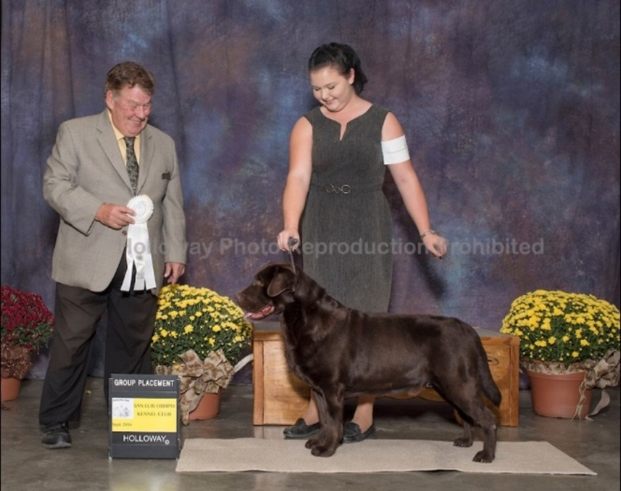 Sporting Group 4 - Handled by Mallori Seifert San Luis Obispo Kennel Club - Paso Robles, CA Judge: Mr. Del Richards September 25, 2016 *Storm's first time out as a special*