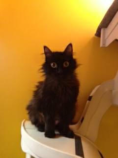 momma cat.jpg