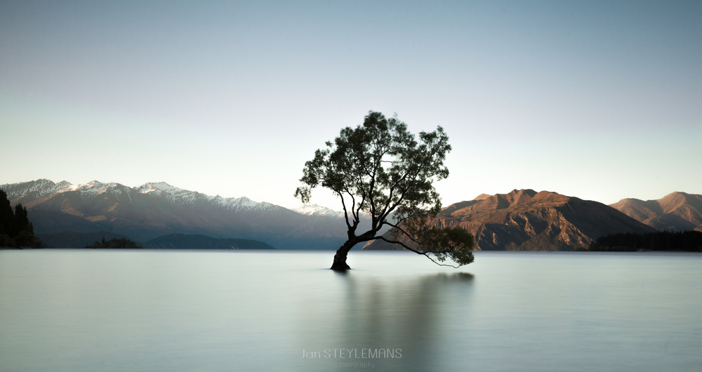 The Wanaka tree, Wanaka, New Zealand