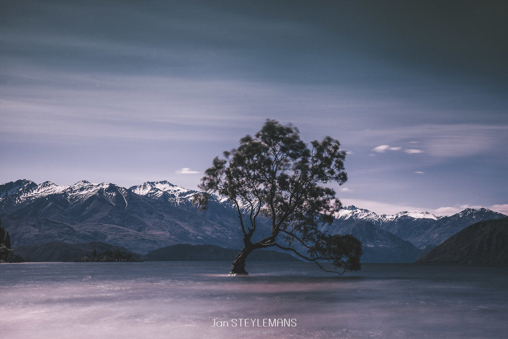 8. That Wanaka Tree, New Zealand