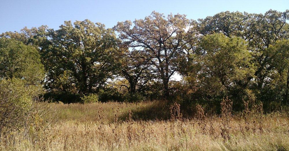 Love this piece of oak savannah!