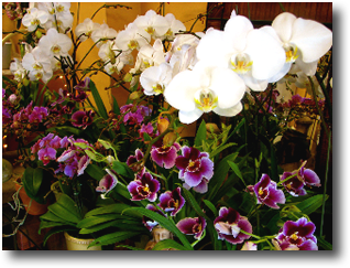orchids2.png